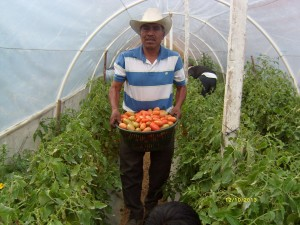 Growing Tomatoes at high altitude? Year Round? with God's Hand Yes. The CHE training is been instrumental.