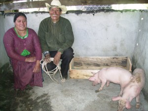 A second generation of piglets is beginning to be distributed from the CHE Trainers to the Villagers.